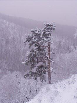 Гора Шишка